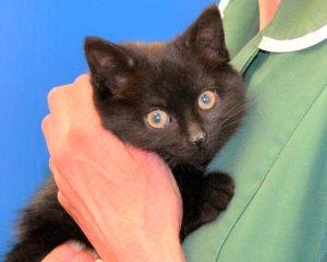 Kitten with nurse