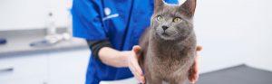 Grey cat with vet