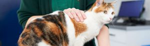 Ginger and white cat with vet,