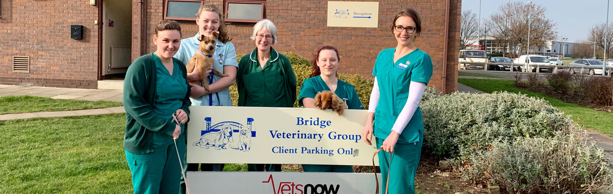 Veterinary nurses